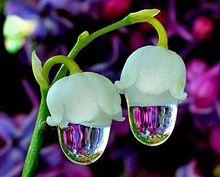 お花の水滴